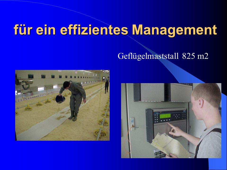 für ein effizientes Management Geflügelmaststall 825 m2