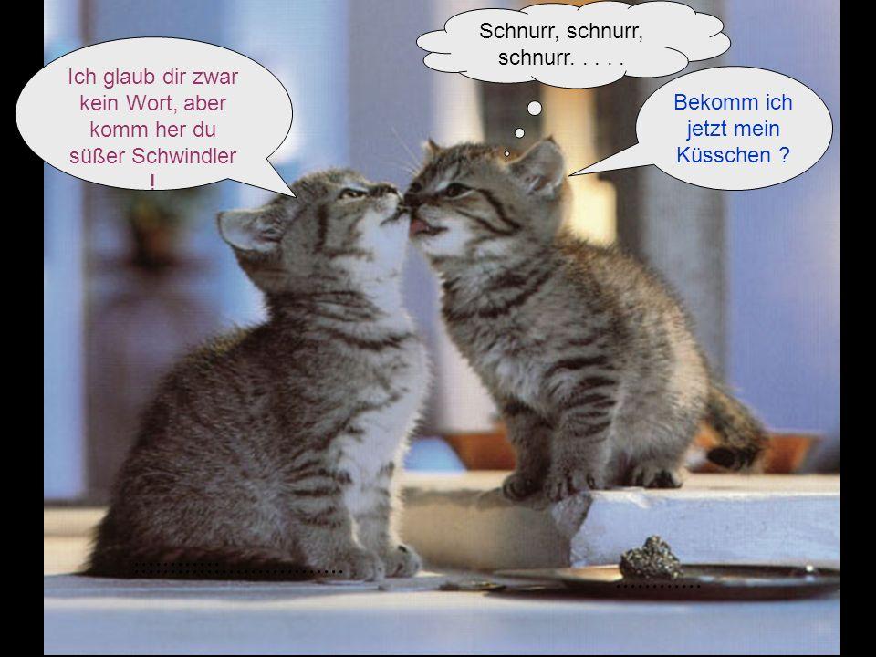 Bekomm ich jetzt mein Küsschen ? Ich glaub dir zwar kein Wort, aber komm her du süßer Schwindler ! Schnurr, schnurr, schnurr..........................