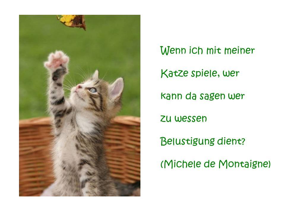 Für blinde Seelen sind sich alle Katzen ähnlich. Für Katzenliebhaber ist jede Katze, von Anbeginn an, absolut einzigartig. (Jenny de Vries)