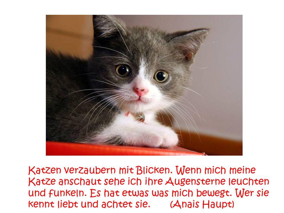Hat man eine Katze geschimpft und schaut man sie dann an, könnte man glauben, dass sie jedes Wort verstanden hat. Jedenfalls macht sie ein Gesicht, al