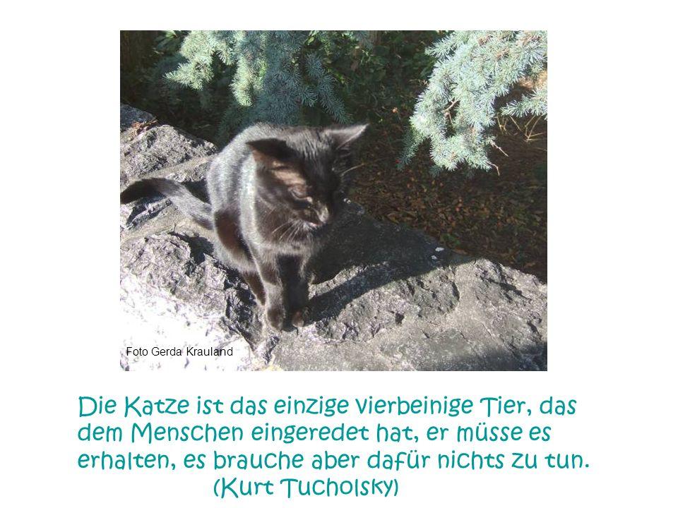 Foto Gerda Krauland Katzen sind ziemlich empfindliche Wesen und können allerlei Wehwehchen bekommen, aber ich habe noch nie gehört, dass eine mal unte