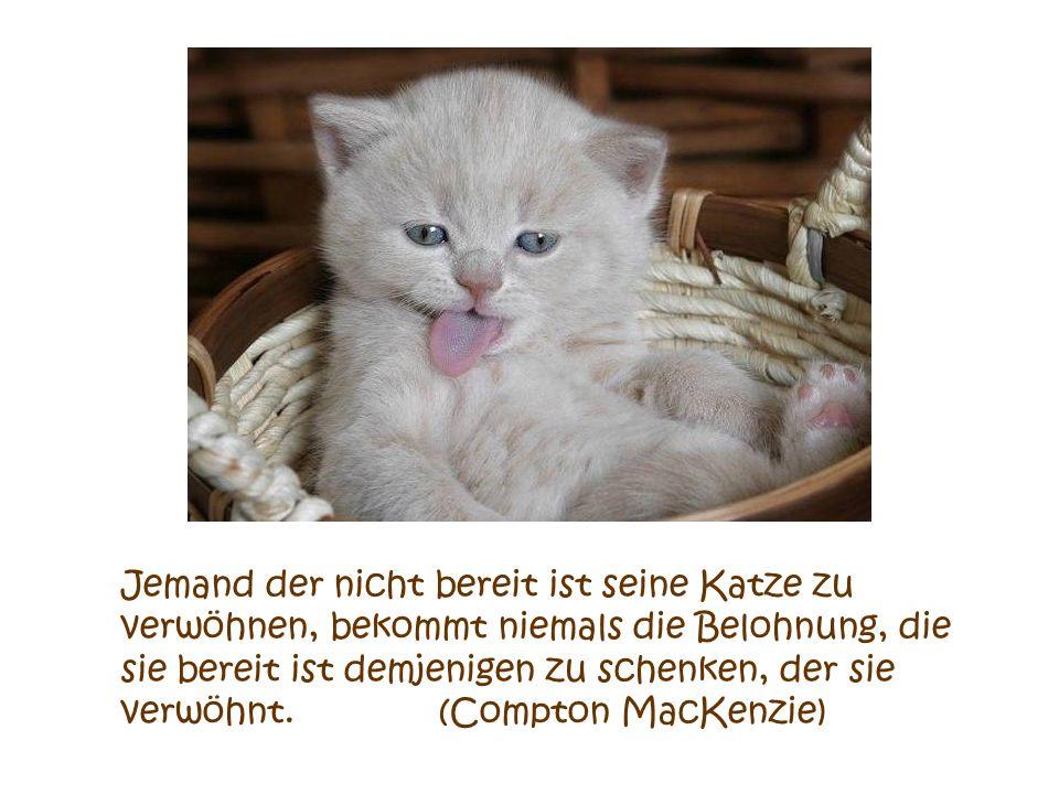 Foto Gerda Krauland Würde man Menschen mit Katzen kreuzen, würde dies die Menschen veredeln, aber die Katzen herabsetzen. (Mark Twain)