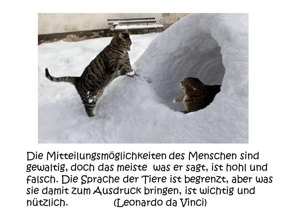 Jemand der nicht bereit ist seine Katze zu verwöhnen, bekommt niemals die Belohnung, die sie bereit ist demjenigen zu schenken, der sie verwöhnt.(Comp