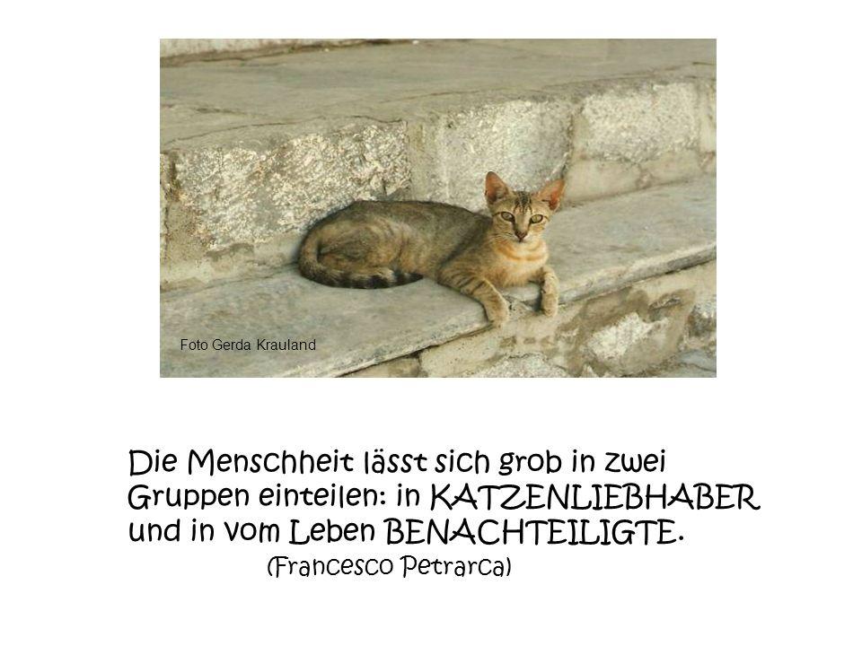 Foto Gerda Krauland Die Menschheit lässt sich grob in zwei Gruppen einteilen: in KATZENLIEBHABER und in vom Leben BENACHTEILIGTE.