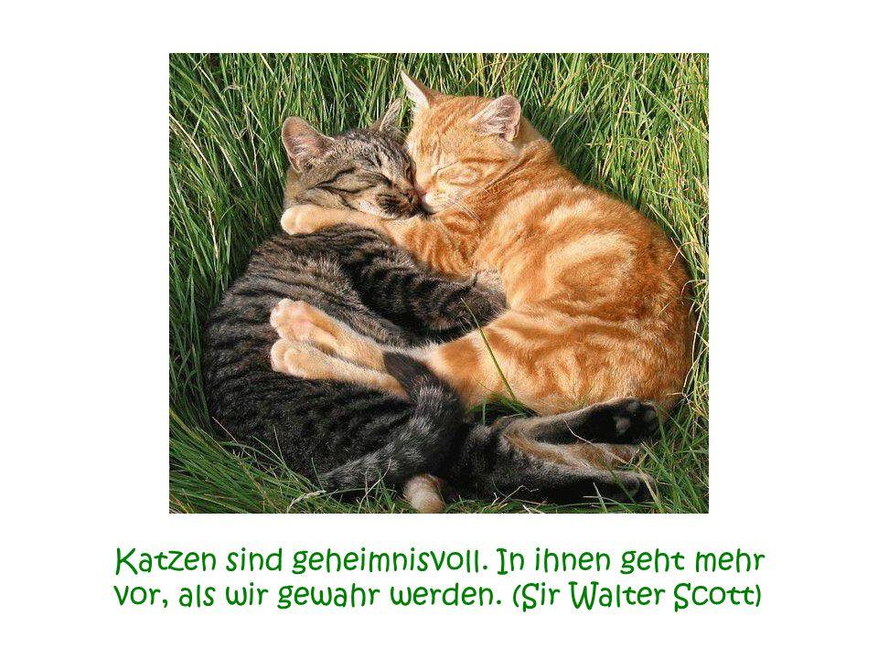 Katzen sind geheimnisvoll. In ihnen geht mehr vor, als wir gewahr werden. (Sir Walter Scott)