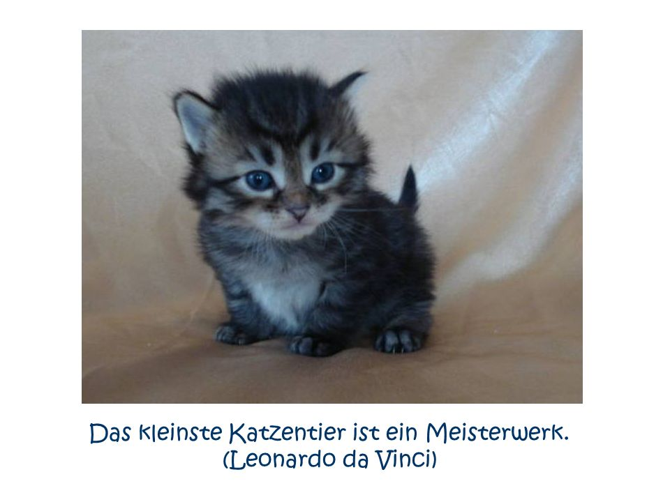 Das kleinste Katzentier ist ein Meisterwerk. (Leonardo da Vinci)