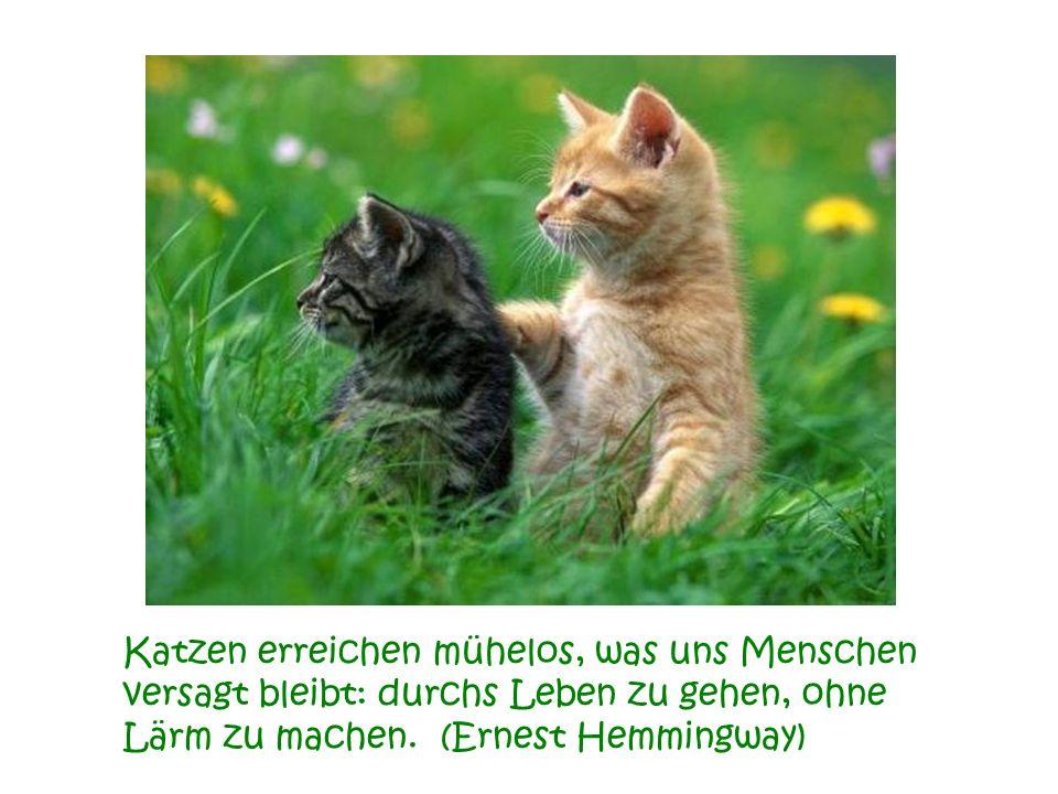 Katzen erreichen mühelos, was uns Menschen versagt bleibt: durchs Leben zu gehen, ohne Lärm zu machen.(Ernest Hemmingway)