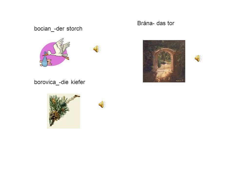 bocian_-der storch borovica_-die kiefer Brána- das tor
