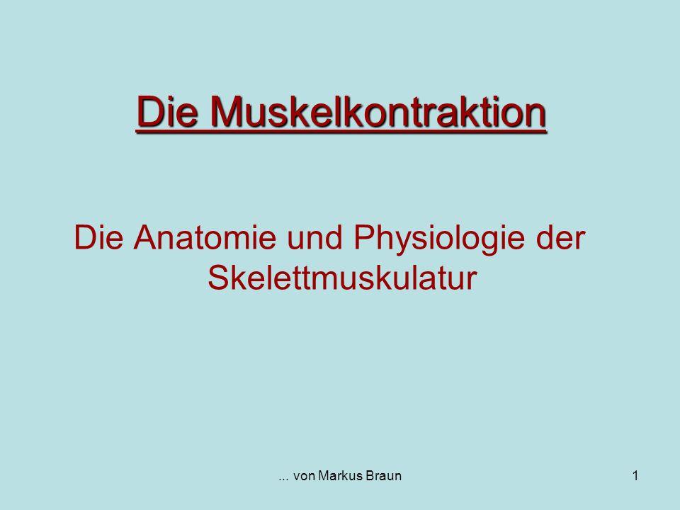 ... von Markus Braun1 Die Muskelkontraktion Die Anatomie und Physiologie der Skelettmuskulatur