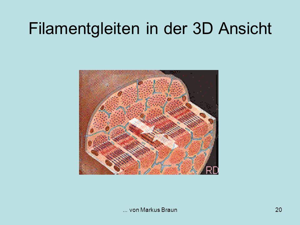 ... von Markus Braun20 Filamentgleiten in der 3D Ansicht