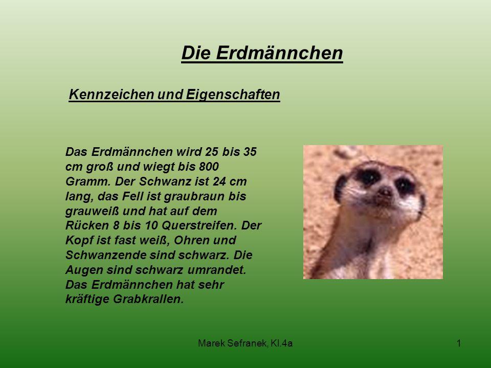 Marek Sefranek, Kl.4a1 Kennzeichen und Eigenschaften Das Erdmännchen wird 25 bis 35 cm groß und wiegt bis 800 Gramm. Der Schwanz ist 24 cm lang, das F
