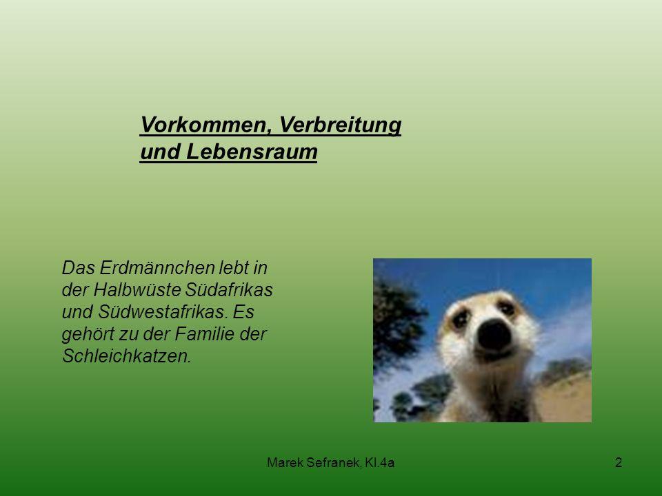 Marek Sefranek, Kl.4a2 Vorkommen, Verbreitung und Lebensraum Das Erdmännchen lebt in der Halbwüste Südafrikas und Südwestafrikas. Es gehört zu der Fam