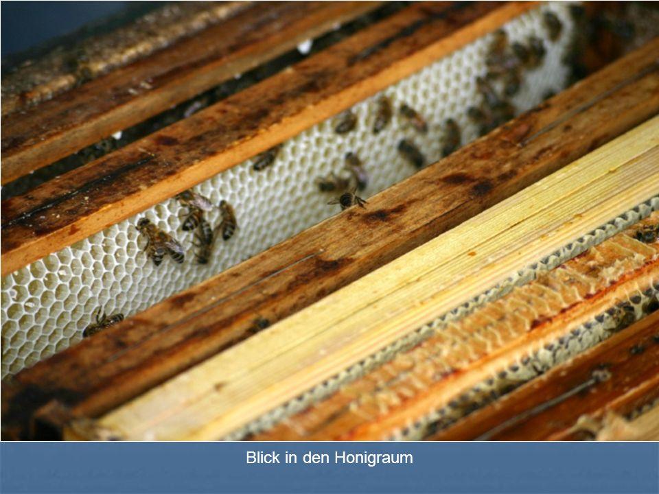 Blick in den Honigraum