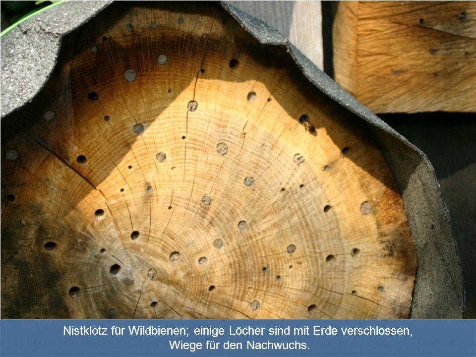 Nistklotz für Wildbienen; einige Löcher sind mit Erde verschlossen, Wiege für den Nachwuchs.