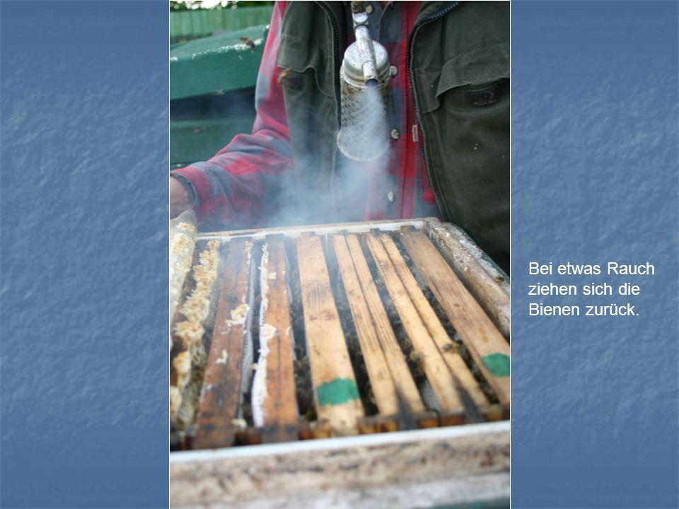 Bei etwas Rauch ziehen sich die Bienen zurück.