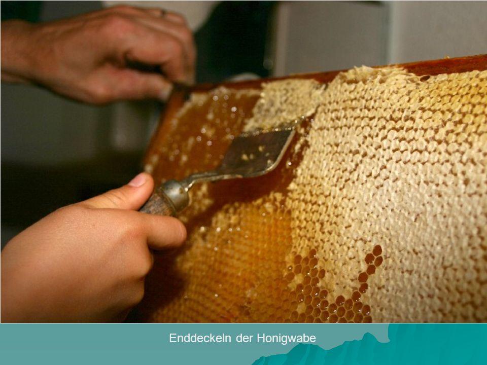 Enddeckeln der Honigwabe