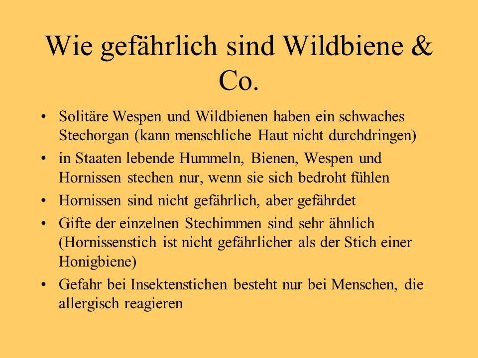 Wie gefährlich sind Wildbiene & Co.