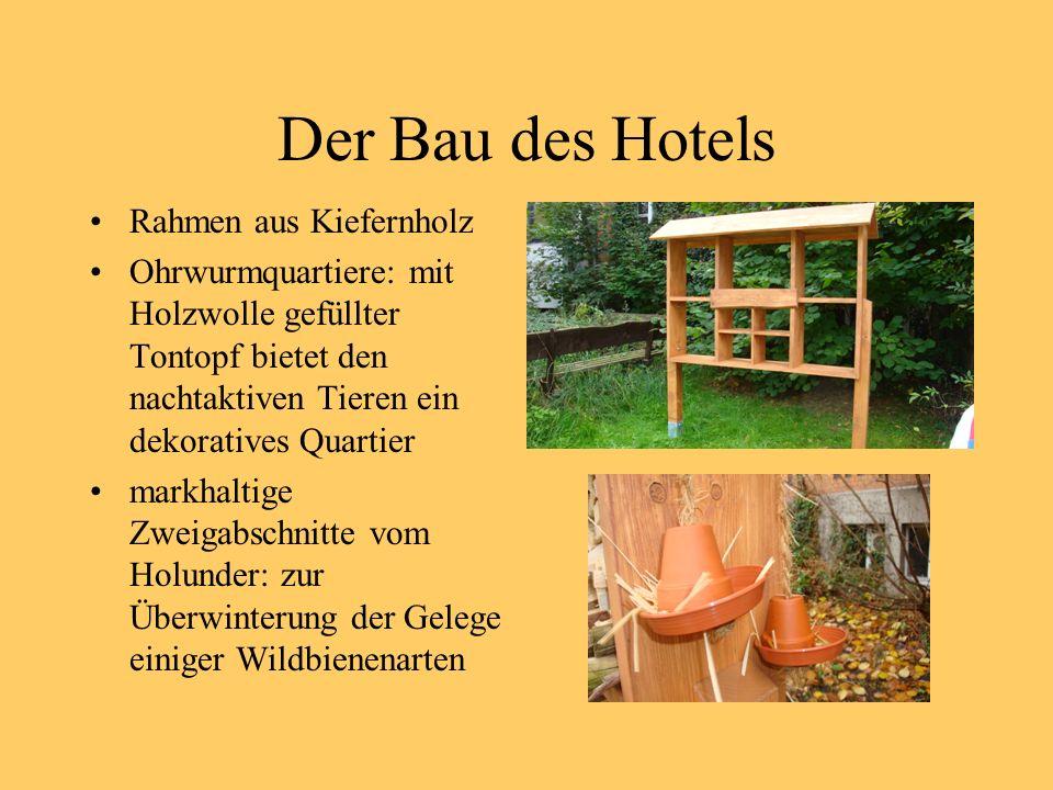 Der Bau des Hotels Rahmen aus Kiefernholz Ohrwurmquartiere: mit Holzwolle gefüllter Tontopf bietet den nachtaktiven Tieren ein dekoratives Quartier markhaltige Zweigabschnitte vom Holunder: zur Überwinterung der Gelege einiger Wildbienenarten