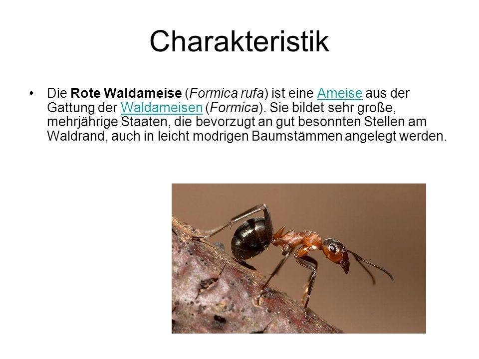 Charakteristik Die Rote Waldameise (Formica rufa) ist eine Ameise aus der Gattung der Waldameisen (Formica).