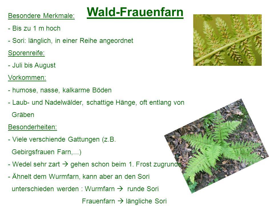 Wald-Frauenfarn Besondere Merkmale: - Bis zu 1 m hoch - Sori: länglich, in einer Reihe angeordnet Sporenreife: - Juli bis August Vorkommen: - humose,