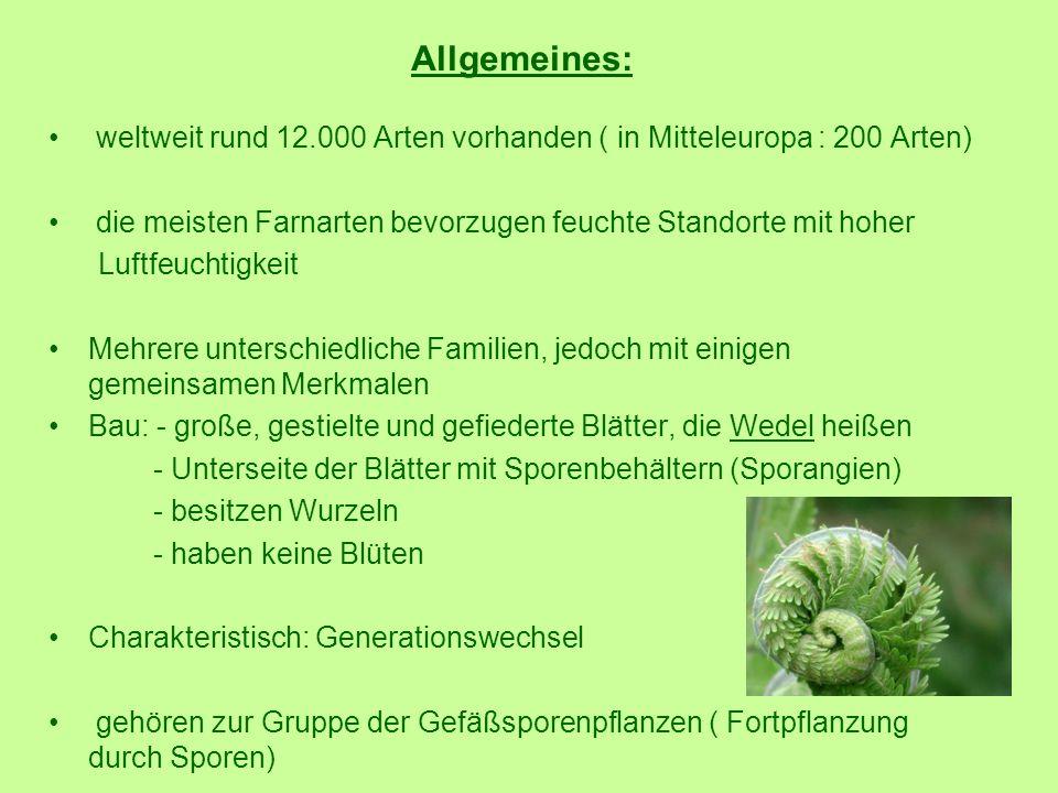 Allgemeines: weltweit rund 12.000 Arten vorhanden ( in Mitteleuropa : 200 Arten) die meisten Farnarten bevorzugen feuchte Standorte mit hoher Luftfeuc