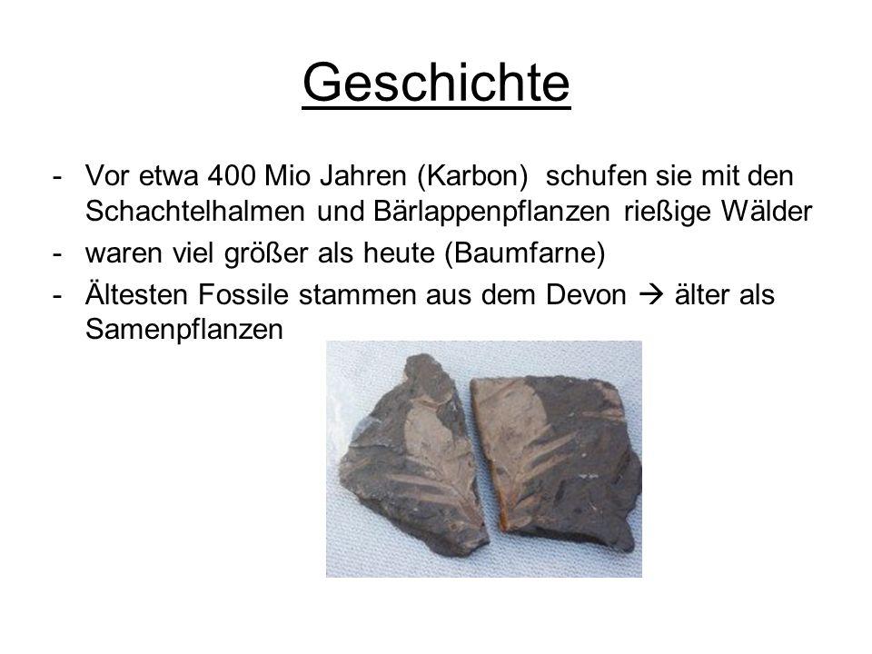 Geschichte -Vor etwa 400 Mio Jahren (Karbon) schufen sie mit den Schachtelhalmen und Bärlappenpflanzen rießige Wälder -waren viel größer als heute (Ba