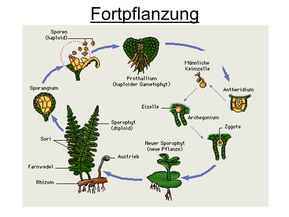 Fortpflanzung