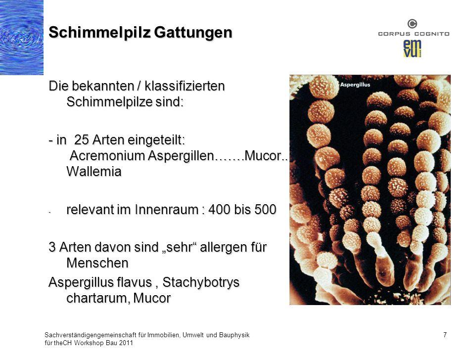 Die bekannten / klassifizierten Schimmelpilze sind: - in 25 Arten eingeteilt: Acremonium Aspergillen…….Mucor.. Wallemia - relevant im Innenraum : 400