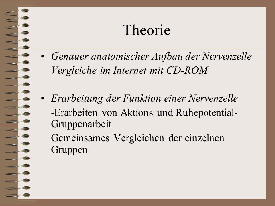 Theorie Genauer anatomischer Aufbau der Nervenzelle Vergleiche im Internet mit CD-ROM Erarbeitung der Funktion einer Nervenzelle -Erarbeiten von Aktio