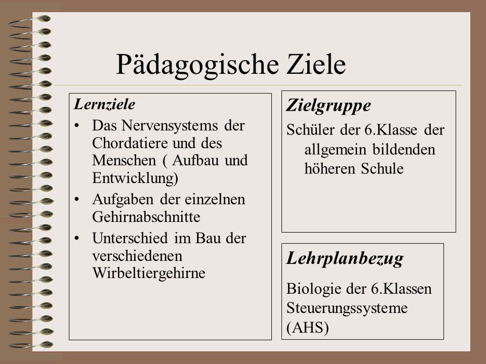 Pädagogische Ziele Lernziele Das Nervensystems der Chordatiere und des Menschen ( Aufbau und Entwicklung) Aufgaben der einzelnen Gehirnabschnitte Unte