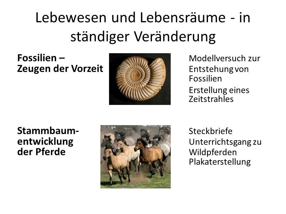 Lebewesen und Lebensräume - in ständiger Veränderung Fossilien – Modellversuch zur Zeugen der Vorzeit Entstehung von Fossilien Erstellung eines Zeitstrahles Stammbaum- Steckbriefe entwicklung Unterrichtsgang zu der Pferde Wildpferden Plakaterstellung