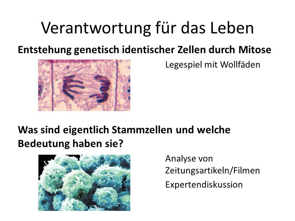 Verantwortung für das Leben Entstehung genetisch identischer Zellen durch Mitose Legespiel mit Wollfäden Was sind eigentlich Stammzellen und welche Be