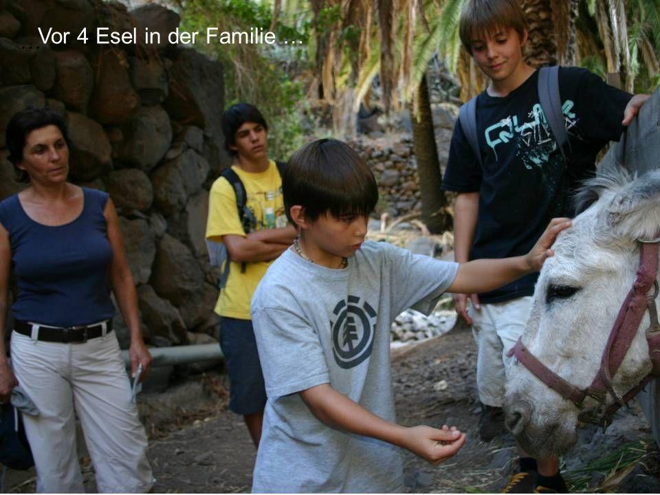 … Vor 4 Esel in der Familie …