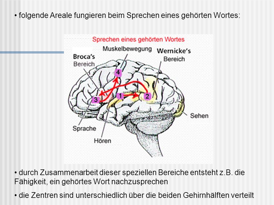 folgende Areale fungieren beim Sprechen eines gehörten Wortes: durch Zusammenarbeit dieser speziellen Bereiche entsteht z.B. die Fähigkeit, ein gehört