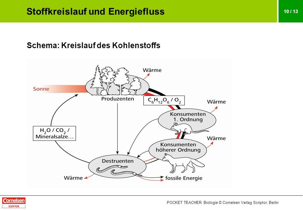 POCKET TEACHER Biologie © Cornelsen Verlag Scriptor, Berlin 10 / 13 Schema: Kreislauf des Kohlenstoffs Stoffkreislauf und Energiefluss