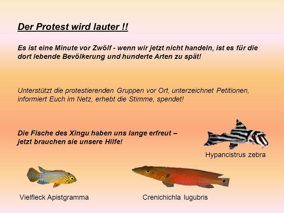Der Protest wird lauter !.