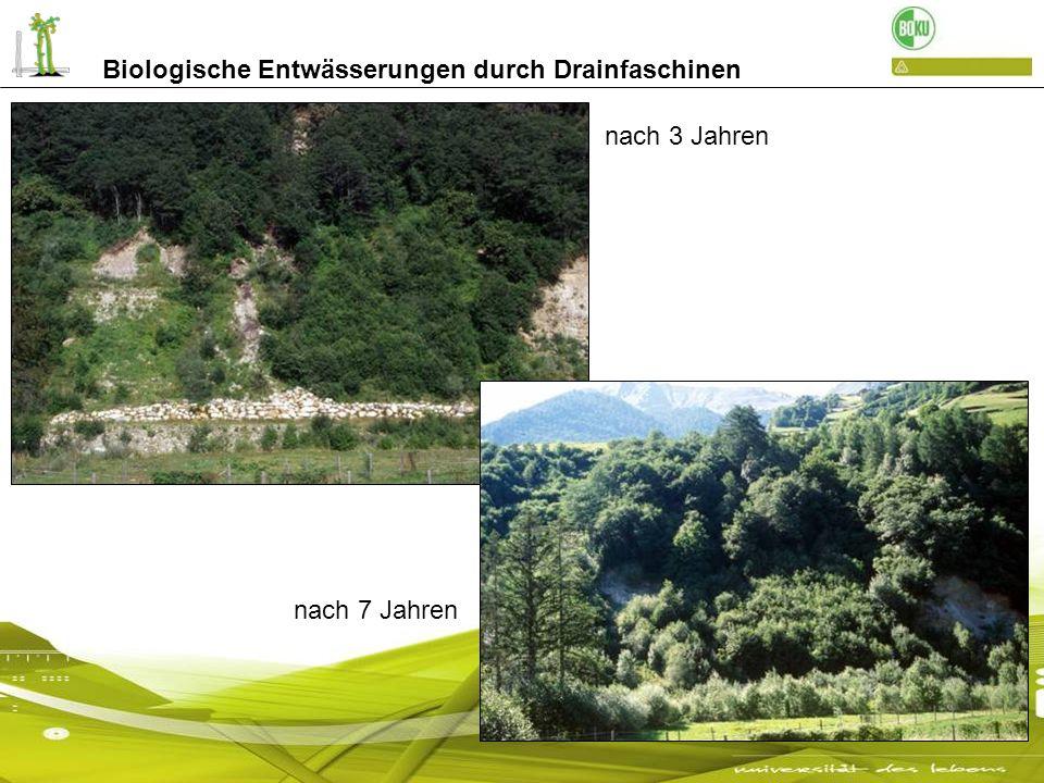 nach 3 Jahren nach 7 Jahren Biologische Entwässerungen durch Drainfaschinen