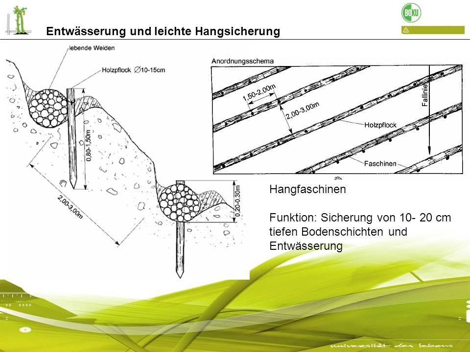Entwässerung und leichte Hangsicherung Hangfaschinen Funktion: Sicherung von 10- 20 cm tiefen Bodenschichten und Entwässerung