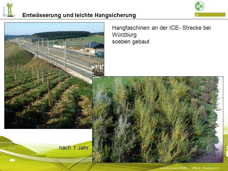 Entwässerung und leichte Hangsicherung Hangfaschinen an der ICE- Strecke bei Würzburg soeben gebaut nach 1 Jahr