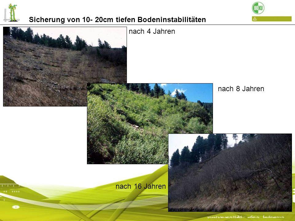 3 jährige bepflanzte Pilotenwände: Landesstraße Schnals Pilotenwand nur eingegrünt- Wiesenfläche im Ultental Sicherung von 10- 20cm tiefen Bodeninstabilitäten