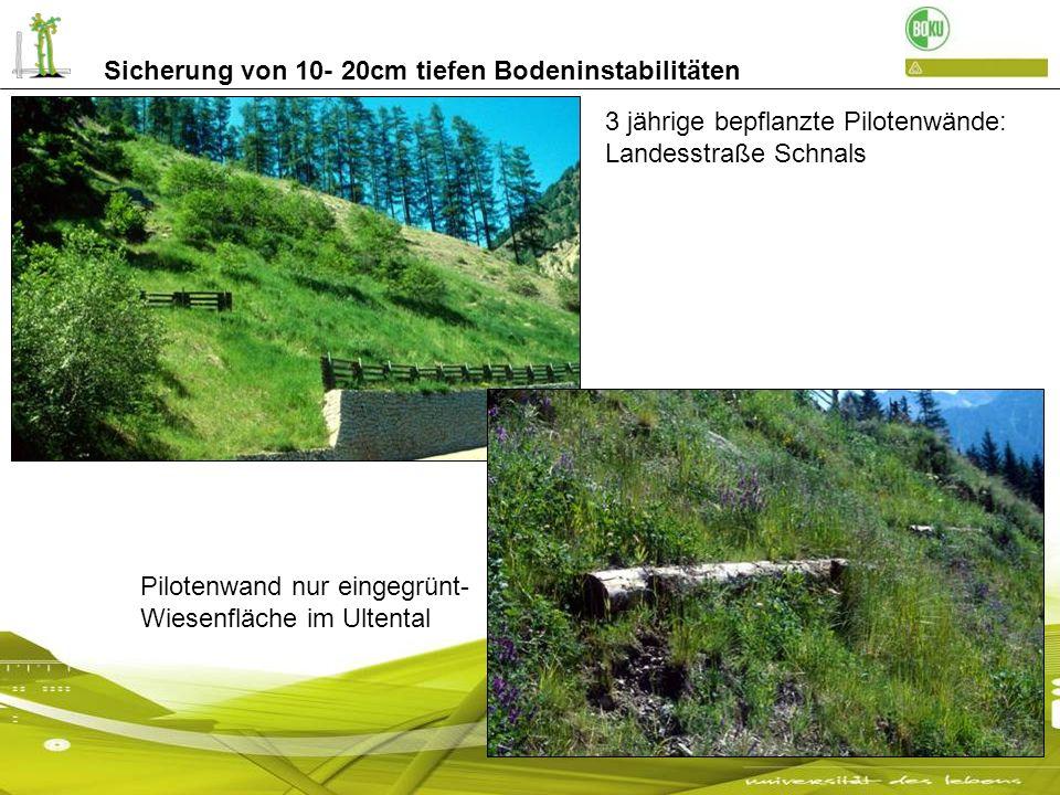 3 jährige bepflanzte Pilotenwände: Landesstraße Schnals Pilotenwand nur eingegrünt- Wiesenfläche im Ultental Sicherung von 10- 20cm tiefen Bodeninstab