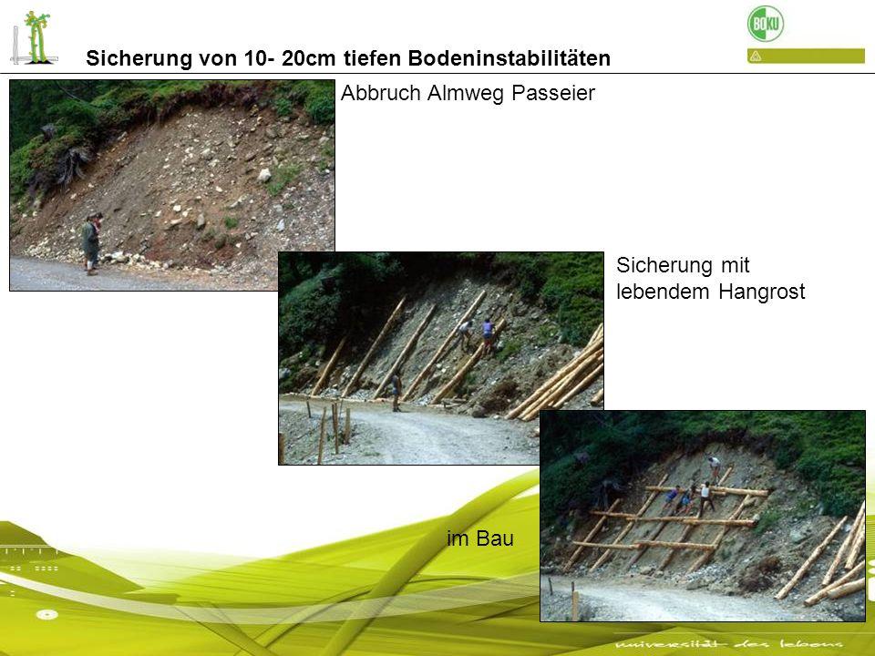 Abbruch Almweg Passeier Sicherung mit lebendem Hangrost im Bau