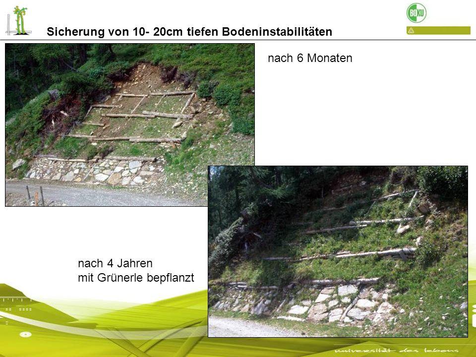 Sicherung von 30- 100cm tiefen Bodeninstabilitäten einfache Holzkrainerwand nach mehreren Jahren Almweg Passeier