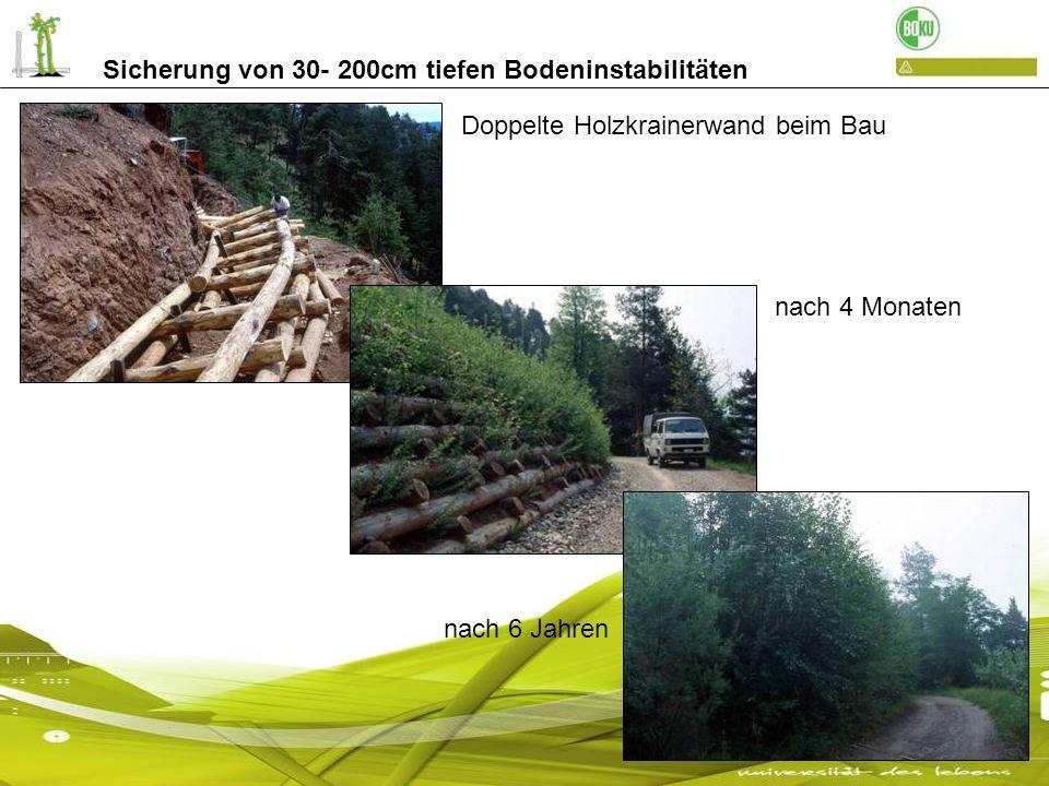 Sicherung von 30- 200cm tiefen Bodeninstabilitäten steile Betonkrainerwände als Stützkörper: eine nachträgliche Bepflanzung ist schwer durchzuführen Detail: mit Steckhölzern nach 3 Jahren
