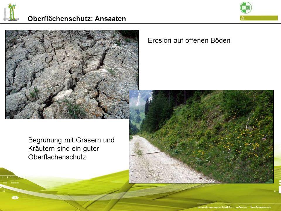 Oberflächenschutz: Ansaaten Erosion auf offenen Böden Begrünung mit Gräsern und Kräutern sind ein guter Oberflächenschutz