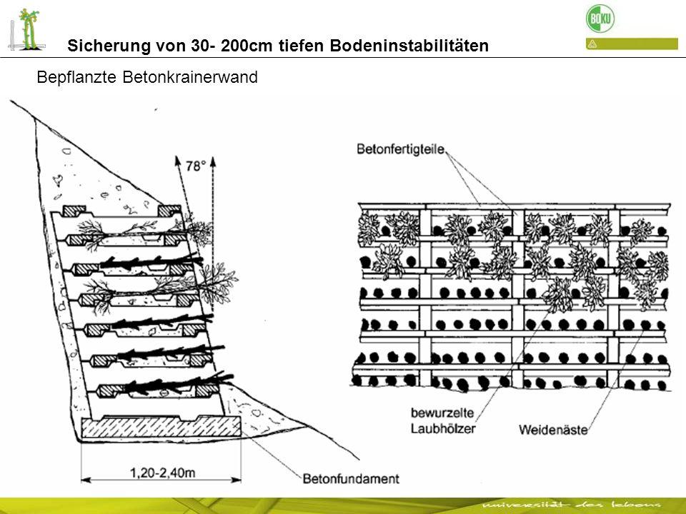 Sicherung von 30- 200cm tiefen Bodeninstabilitäten Bau einer Betonkrainerwand Straße Fürstenburg / Burgeis mit Kletterpflanzen bepflanzt, nach 2 Jahren nach 9 Jahren