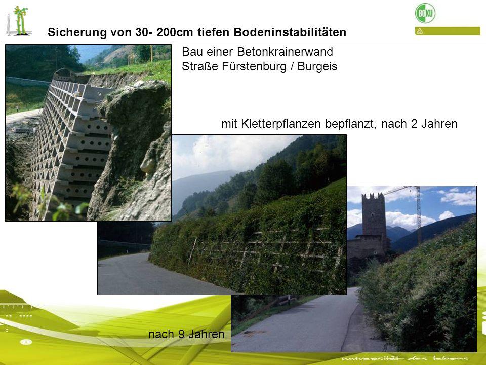 Sicherung von 30- 200cm tiefen Bodeninstabilitäten Bau einer Betonkrainerwand Straße Fürstenburg / Burgeis mit Kletterpflanzen bepflanzt, nach 2 Jahre