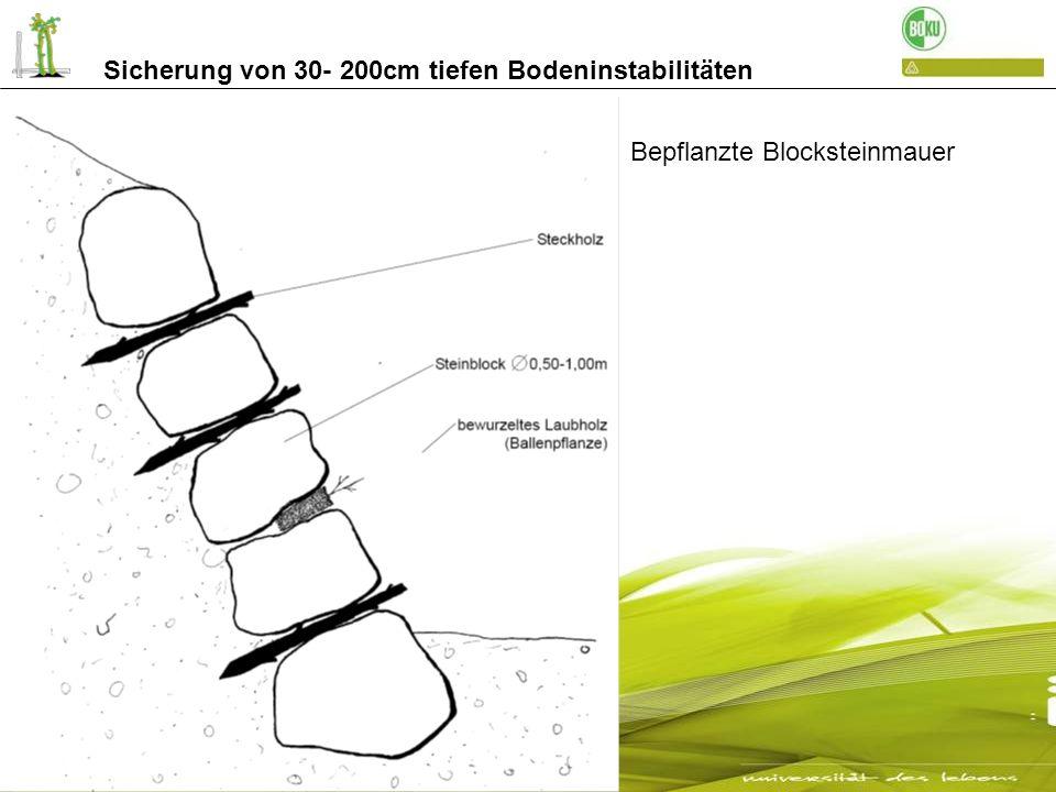 Sicherung von 30- 200cm tiefen Bodeninstabilitäten mit Hydrosaat begrünte Blocksteinmauer nach 17 Jahren Weg zur Gadria - Schlanders Detail der 17 jährigen Begrünung