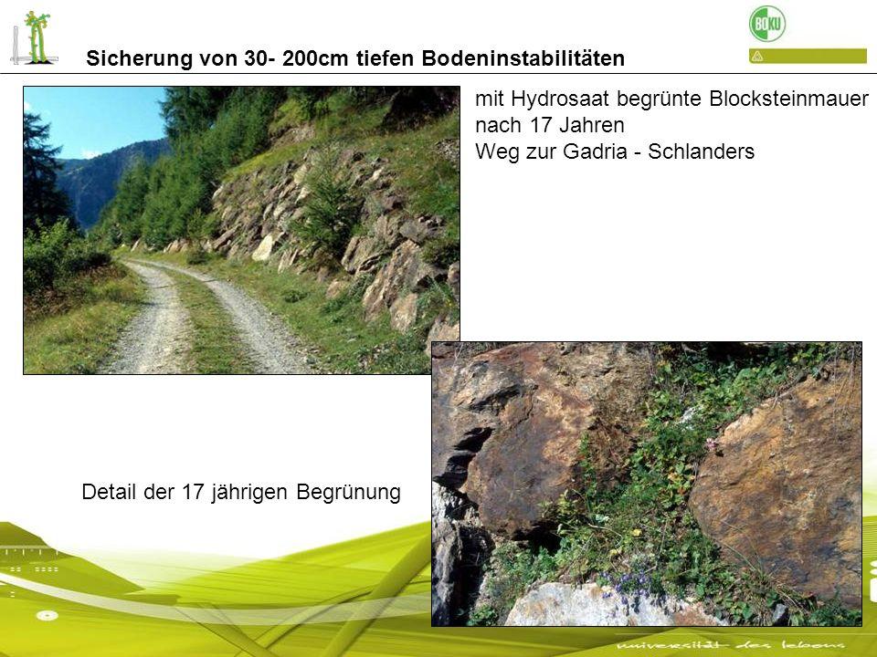 Sicherung von 30- 200cm tiefen Bodeninstabilitäten mit Hydrosaat begrünte Blocksteinmauer nach 17 Jahren Weg zur Gadria - Schlanders Detail der 17 jäh
