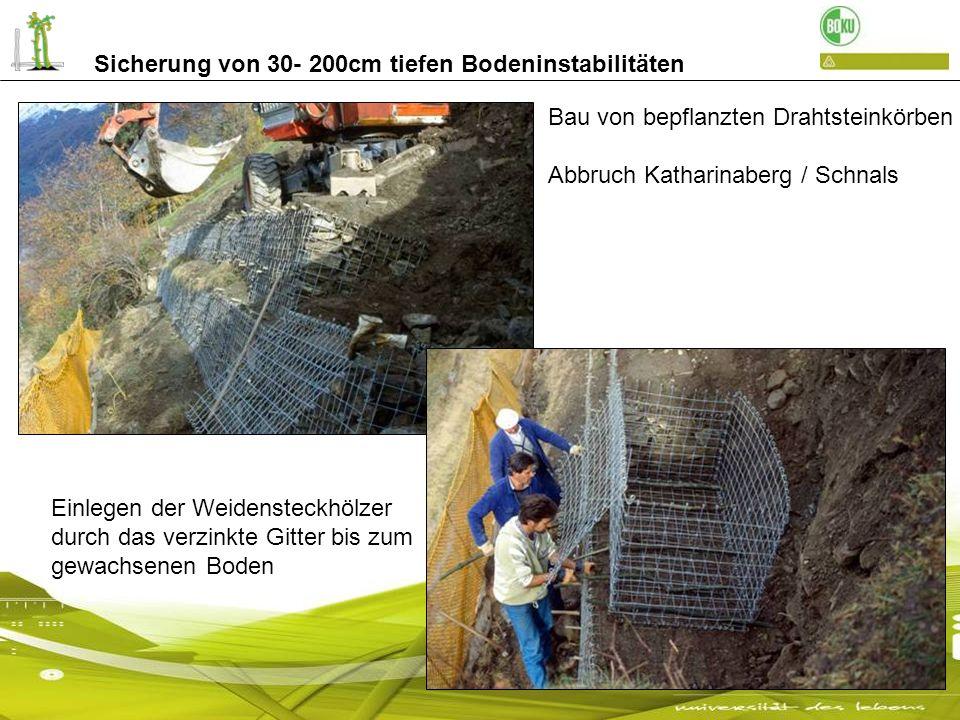 Sicherung von 30- 200cm tiefen Bodeninstabilitäten Bau von bepflanzten Drahtsteinkörben Abbruch Katharinaberg / Schnals Einlegen der Weidensteckhölzer
